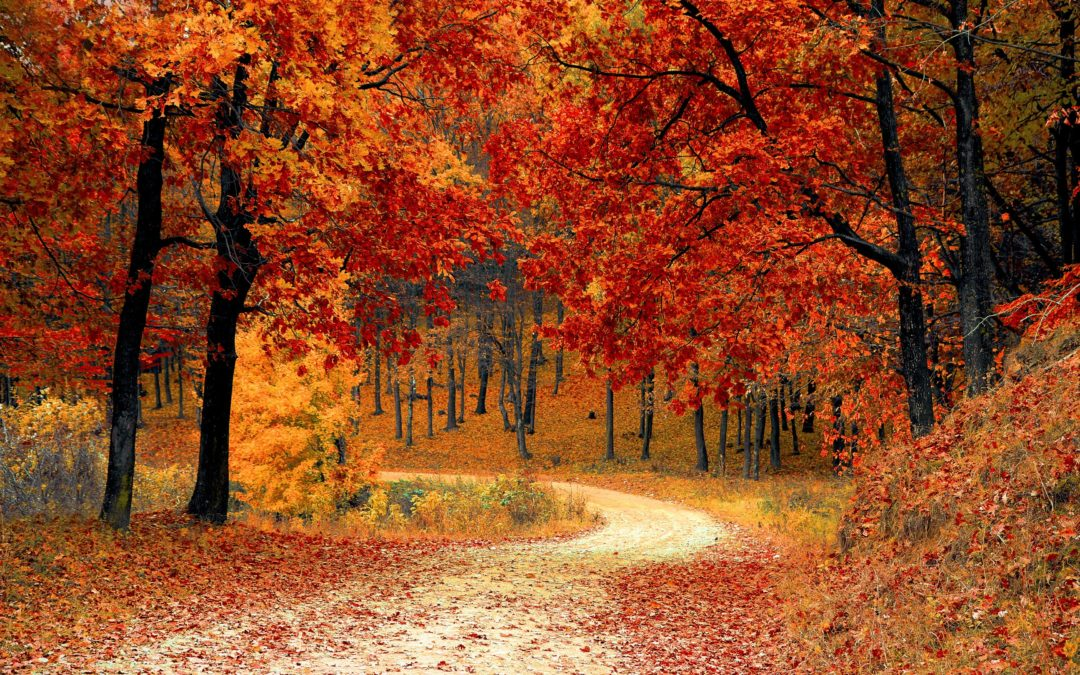 Fall Colors: What's Hiding Behind All That Work?